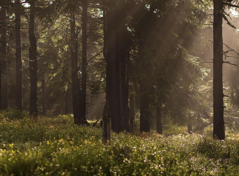 Wald Lichtstimmung