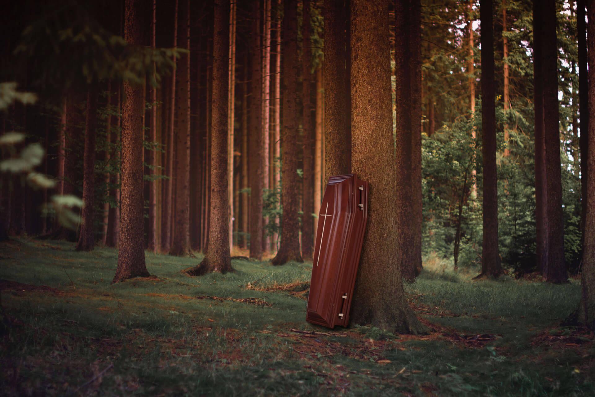 Imagebild Sarg im Wald